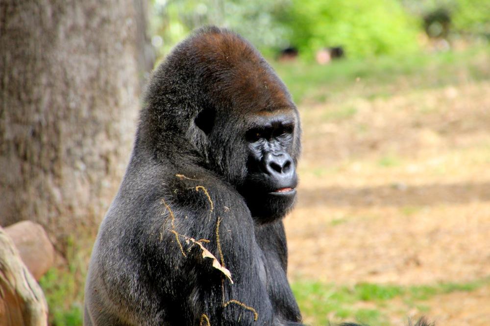 ZooAtlanta031916-34
