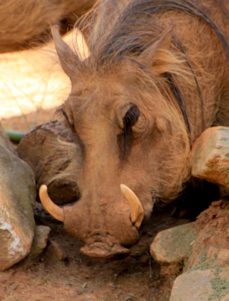 ZooAtlanta031916-50