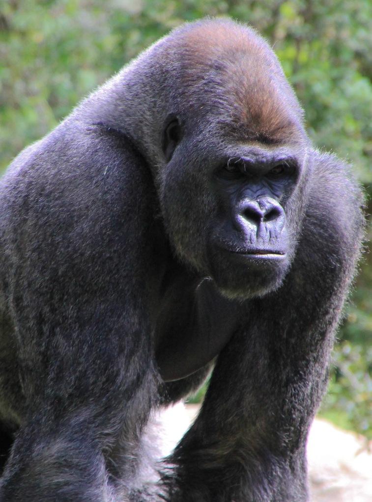 ZooAtlanta031916-54